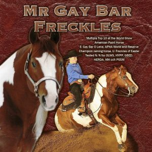 Mr Gay Bar