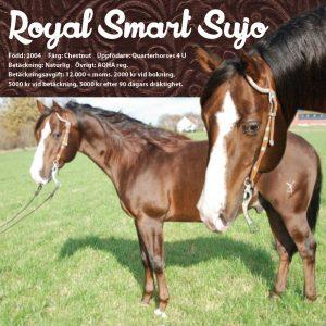 Royal Smart Suyo