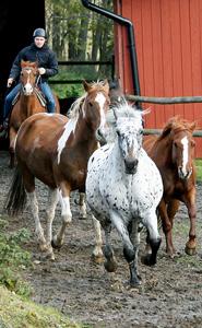 jultorp ranch tävlingar