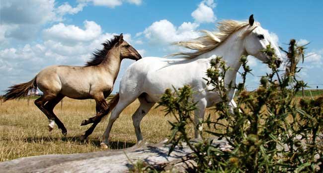 mustang häst namn
