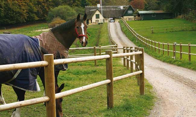 storlek hage häst