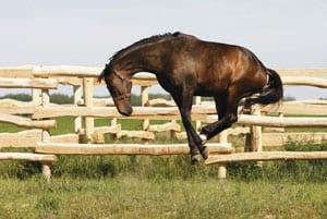 häst lös i magen