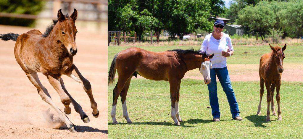 Silver-Spurs-Foals-2-web