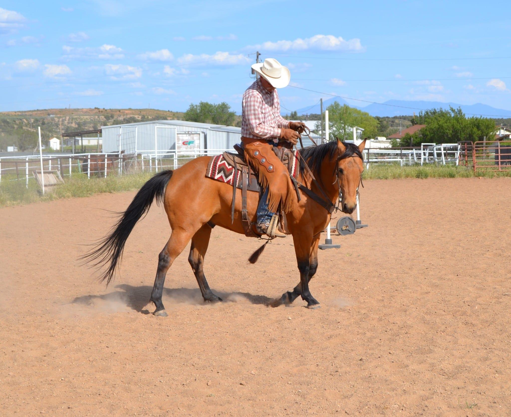stel häst tillskott